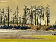 Kleines Waldstück (GerWi) Tags: trees winter sky plants tree skyline forest landscape outdoor pflanzen wiesen himmel landschaft wald bäume baum busch acre acker boden erde grund büsche heiter puderschnee