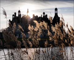 Chambord variations - les joncs (Paucal) Tags: france castle de la unesco chambord loire blois chteaux hassy 503cw cfe80 cfv39