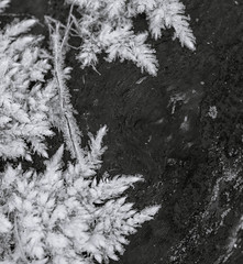 Winters Grasp.jpg (Dylan Nardini) Tags: winter snow cold macro ice flora frost 2016 lowers clydevalley