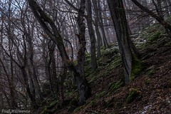 Wald im Nebel (Fooß) Tags: schnee winter nebel laub natur hunsrück traumschleife dünnbachpfad