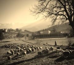 2016? (salernolorenza) Tags: abruzzo gregge