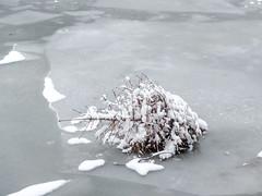 Frohe Ostern! (lunamtra) Tags: schnee kreuzberg weihnachtsbaum eis landwehrkanal