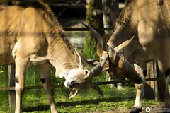 _DSC5762 (alessandro.spagnolli) Tags: zoo natura tamronlens naturalistica lecornelle parcofaunistico sonyalpha77
