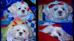 KILLED AT THE GROOMER (OdeteCondeOliveira) Tags: neck hanging killed strangled cruelty groomer