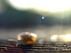 ~ Speed of life ~ (Shelby's Trail) Tags: morning light macro bokeh snail mini trail ~ speedoflife happytrails hbw bokehwednesday hbwbringingtheblurrysince08