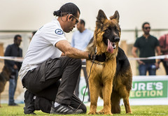 Number One (Ali-Dexter) Tags: show dogs champion rottweiler german trophy breed kennel champ sheperd trohpy