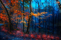 Burning Leaves (naddesigns) Tags: wow