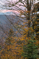 Towards to end of the day (RKAMARI) Tags: travel autumn trees sunset color fall nature forest landscape outdoor serene bolu yedigller intimatelandscape