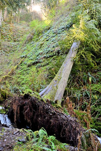 A downed tree