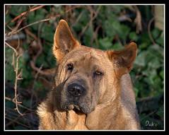 What's up (patrick.verstappen) Tags: dog pet cute animal garden photo yahoo spring google nikon flickr belgium pat sigma lovely facebook picassa daiko topmodel gingelom d5100 pinterest picmonkey