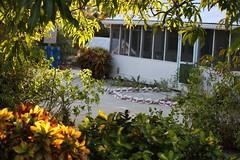Peeking through the leaves! (Simone Scott) Tags: house traditional caymanislands sandgarden caymanbrac caymanian sandyard