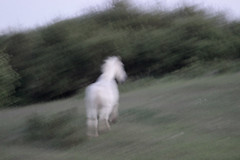 an escape from reality (feldweg) Tags: horse caballo cheval escape reality cavallo pferd whitehorse hest kon