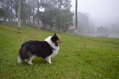 DSC_0100 (Priscila Vilela Borges) Tags: brazil southamerica rural south sierra araucaria santacatarina montain turismorural serracatarinense montainrange ubirici