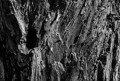Sculpted by time (trochford) Tags: wood old light shadow blackandwhite bw usa abstract tree texture broken nature monochrome canon eos mono blackwhite exterior outdoor decay lexington massachusetts newengland textures treetrunk weathered rough decayed sculpted lexingtonma lexingtonmassachusetts