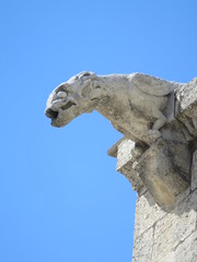 20150405 Vaucluse Avignon - Gargouilles (6) (anhndee) Tags: france church frankreich paca gargoyle avignon glise eglise gargouille vaucluse gargouilles provencealpescotedazur
