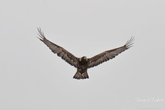Golden Eagle launch and flight