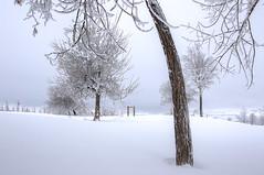 open door. (jrseikaly) Tags: door winter lebanon white snow tree nature jack photography high dynamic range arz hdr cedars seikaly jrseikaly