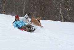 tag team (csnyder103) Tags: snow fun trevor colleen sled petey backyardfun canon70200f28l canoneos7dmkii