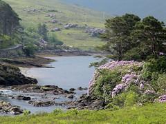 somewhere in Ireland!!!!! (Micheline Canal) Tags: fleur architecture europe ile château irlande ancien océan