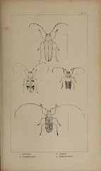 n248_w1150 (BioDivLibrary) Tags: greatbritain insect bugs beetles arthropoda californiaacademyofsciences coleoptera taxonomy:order=coleoptera colorourcollections bhl:page=39307044 dc:identifier=httpbiodiversitylibraryorgpage39307044 bhlarthropod