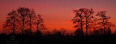This is the day (Marc.van.Veen) Tags: trees red sky orange sun color tree colors field backlight sunrise landscape dawn pentax outdoor serene smc k50 klarenbeek