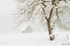 (panie18) Tags: house snow film japan iso200 nikon super    fm3    shiragawago uxi efiniti