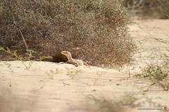 3-Oman-Desert-Marathon-Day-6_0018
