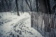 Des pas dans la neige... (Steps In The Snow) (Gilderic Photography) Tags: forest canon woods belgium belgique belgie path chartreuse neige liege chemin 500d gilderic