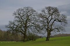 1217-31L (Lozarithm) Tags: studley calne k50 treesshrubs 55300 justpentax pentaxzoom hdpda55300mmf458edwr