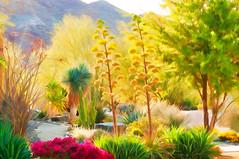 Palm Desert Garden Painting (Linda Cochran) Tags: california garden desert palmsprings digitalart digitalpainting palmdesert photopainting smudgepainting