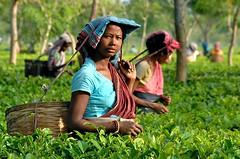 India-Assam-tea estate (venturidonatella) Tags: portrait people woman india colors persona women asia faces tea persone te assam colori ritratto gentes volti teaestate piantagionedite