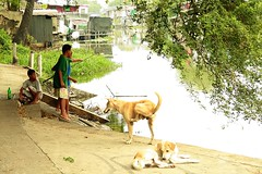 boys fishing with dogs (the foreign photographer - ) Tags: street dogs boys portraits canon thailand fishing kiss bangkok khlong bangkhen thanon 400d