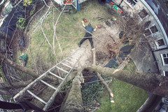 82/366 - Face Down Tuesday #299 (possessed2fisheye) Tags: selfportrait tree fall self accident fisheye lumberjack deathfromabove 2016 creativeselfportrait 366 cuttingtrees fallingfromgrace project366 366project fisheyeselfportrait almostat300 facedowntuesday possessed2fisheye fisheyeireland facedowntuesdayireland facedowntuesdaygroup 366project2016 3662016 project3662016