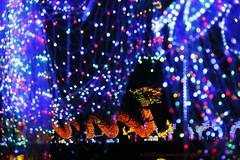 _C0A8567REWS Across the Water,  Jon Perry, 3-3-16 zas (Jon Perry - Enlightenshade) Tags: color colour night chinesenewyear lanterns coloredlights chiswick chineselanterns chiswickhouse colouredlights 3316 jonperry chiswickhouseandgrounds chiswickhousegrounds enlightenshade arranginglightcom magicallanternfestival 20160303