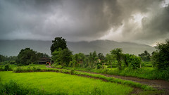 343 - Monsoon Drama (Gladson777) Tags: trip sky panorama india house green field rain clouds rural forest season landscape countryside amazing rice paddy sony low cottage dramatic peaceful stormy calm hills rainy monsoon bombay maharashtra thane 1855 lush alpha mumbai bliss 169 isolated slt a58 vasai virar widescape