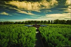 Labirinto di Fontanellato !!! (Alcosinus  On-Off ) Tags: alcosinus nikond90 paysage landscape couleurs colors bambous bamboo italie italy fontanellato labyrinthe labyrinth labirintodellamasone fleursetpaysages innamoramento