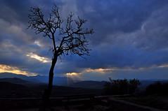Lonely tree (natureloving) Tags: panorama france tree nature landscape nikon solitude d90 natureloving
