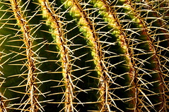 Of needles and pins (johan van moorhem) Tags: grancanaria wondersofnature cactuspark aldeadesannicolas cactualdea