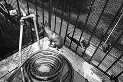 Look-out (alberto.velardi) Tags: street blackandwhite dog cars pipe banister
