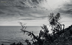 [ #80 :: 2016 ] (Salva Mira) Tags: sea mar mediterranean mediterrneo salva mediterrani xbia marinaalta mediterrnia lamarina matojos matolls benitatxell salvamira salvadormira