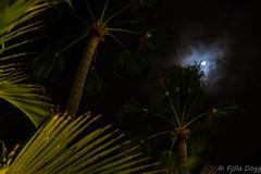 luna (Fjola Dogg) Tags: park vacation holiday canon island hotel spain europe nightshot palm palmtrees tenerife nightsky evropa nightimage parquesantiago3 evrpa plmatr canonpowershotg7x canong7x
