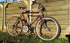 Vintage 1985 KUWAHARA Aries   Mountain Bike (bottledale999) Tags: original mountain beautiful bike bicycle vancouver vintage japanese cool bc burgundy jubilee cycle fred burnaby apollo 1985 aries suntour bullmoose kuwahara 4130 deelite deeley chromoly