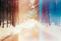 Vintage Roads I (thomas_anthony__) Tags: road travel blue trees winter light orange lake snow color tree film pine analog forest 35mm canon vintage lomo lomography path turquoise vibrant grain dream surreal roadtrip lightleak lightleaks pines memory gradient dreamy paths a1 analogue leak canona1 daydream sapphire daydreams deepcreeklake offcolor lightleaked dreamforest lomochrome lomochrometurquoise