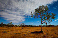 Outback Qld (s.westhead (Simon)) Tags: gumtree treeroots outbackqueensland