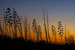 Anochecer en el pital (I) (Salvador Ruiz Gmez) Tags: mar andaluca playa puestadesol barcas almera mediterrneo parquenaturalcabodegatanjar sanmigueldecabodegata