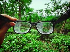 (sahilasanzana) Tags: green tea teagarden sylhet bangladesh teaestate greenary malnicharateaestate