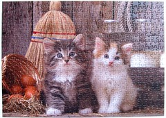 Alas! Caught! / Eyvah! Yakalandik! (Leonisha) Tags: cat chat kittens puzzle katze jigsawpuzzle ktzchen