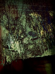 Crepuscular trees (Cold Spell Ahead) Tags: trees abstract twilight doubleexposure overlay abstraction
