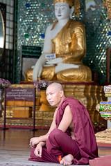 (piper969) Tags: portrait people temple sitting yangon burma prayer religion pray monk monaco sit myanmar budda seated ritratto tempio preghiera bhudda religione pregare birmania buddismo