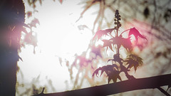 Morning Light (L.Grey Photography) Tags: tree nature leaves sunrise nc spring outdoor wilmington